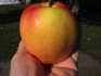 Zachary Pippin apple